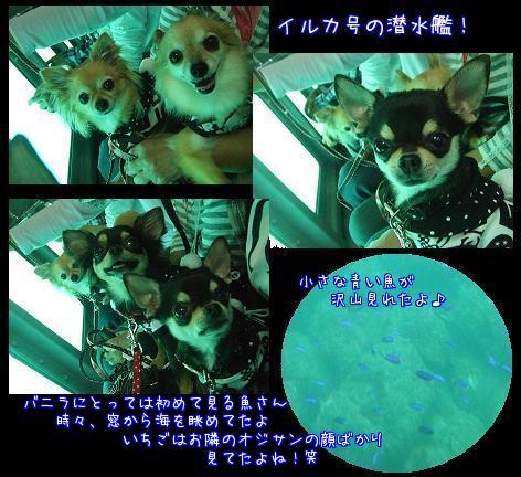 2546_20081006154405.jpg