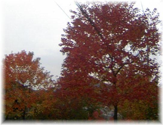 11月紅葉1