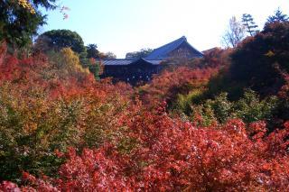 東福寺1_081122