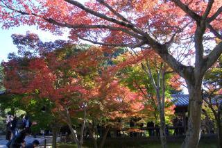 東福寺2_081122