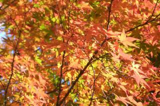 東福寺5_081122