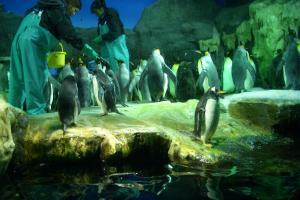 ペンギン_091122