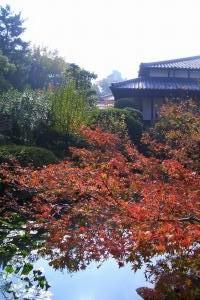 庭園4_091122