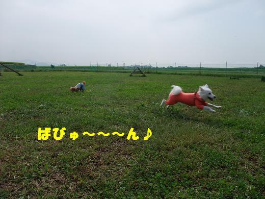 花巻・盛岡秋祭り0036