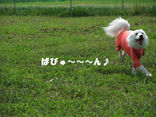 花巻・盛岡秋祭り0053