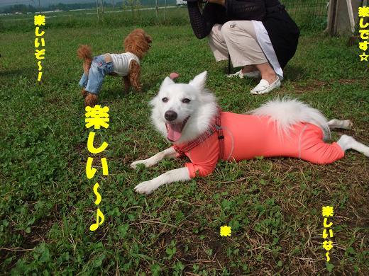 花巻・盛岡秋祭り0041