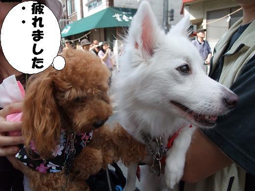 花巻・盛岡秋祭り0082