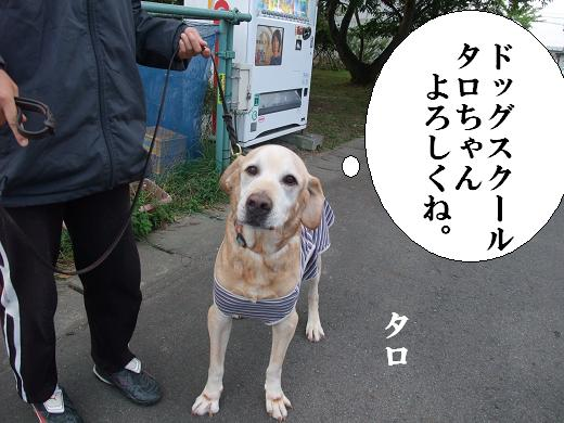 運動会・タロちゃん0022