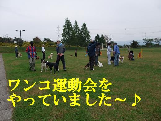 運動会・タロちゃん0108