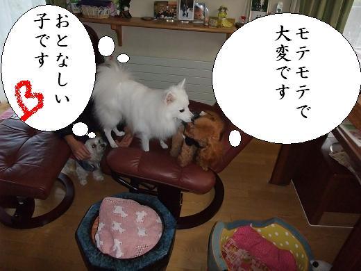 くるみ・シフォン・ご0080