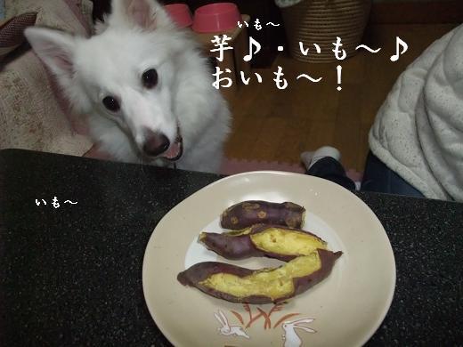 芋ほり0105