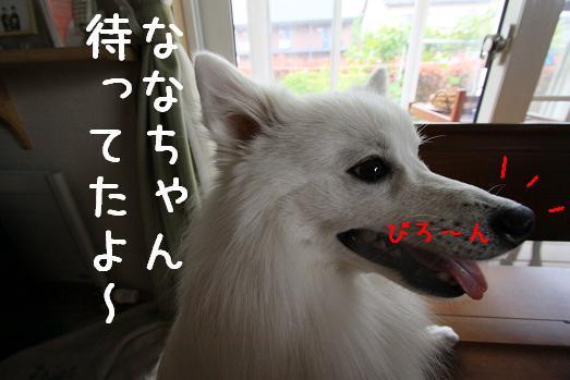 シフォン1