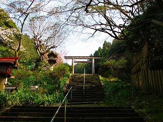日向大神宮・桜2