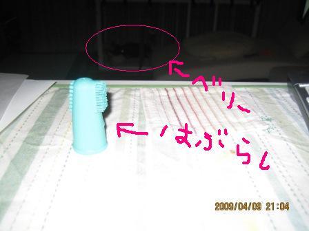 IMG_2799.jpg