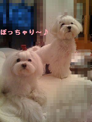 s-photo6.jpg