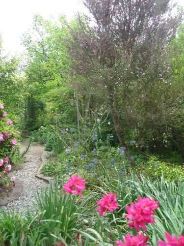 ギンモちゃんの庭