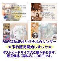 CATNAPカレンダー