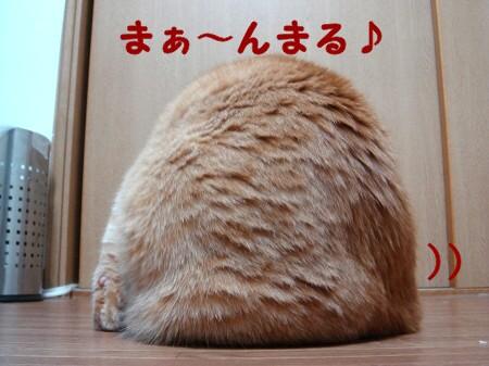 秋は茶色いまん丸ぽん (1)