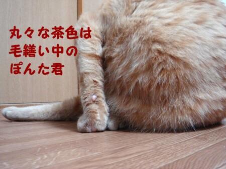 秋は茶色いまん丸ぽん (2)