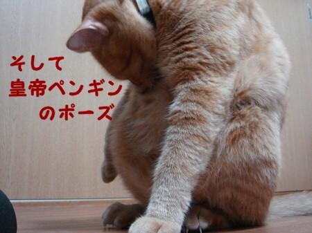 秋は茶色いまん丸ぽん (3)