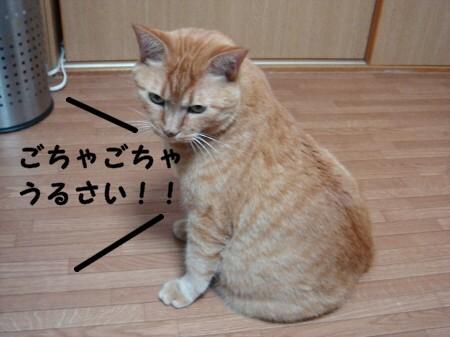 秋は茶色いまん丸ぽん (4)