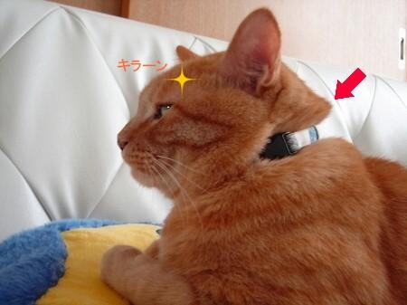 毛っこうロン毛? (3)