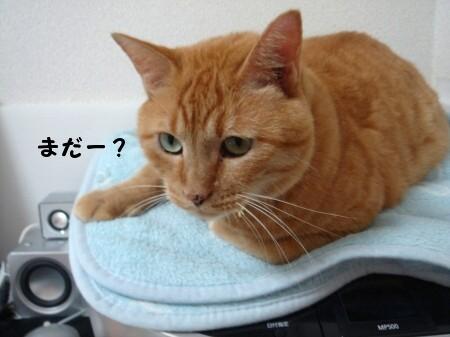 近い近い! (3)