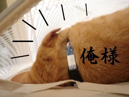 俺様が入るのだ!! (2)