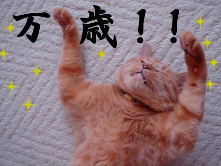 ブログ開設1周年記念日♪ (1)