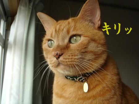 ブログ開設1周年記念日♪ (2)