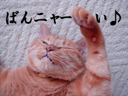 ブログ開設1周年記念日♪ (3)