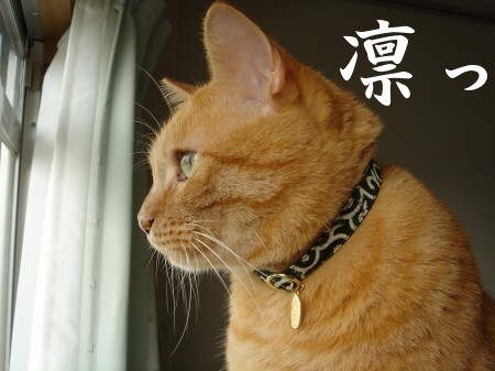 ブログ開設1周年記念日♪ (4)