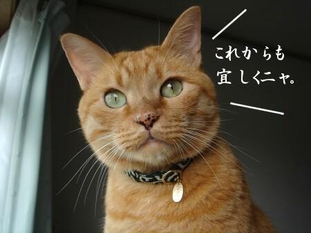 ブログ開設1周年記念日♪ (5)
