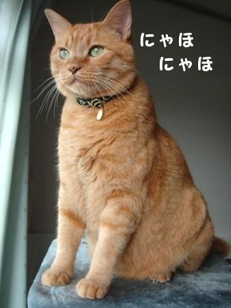 ブログ開設1周年記念日♪ (8)