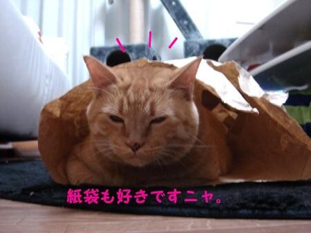 ジョイフルぽん田 (1)