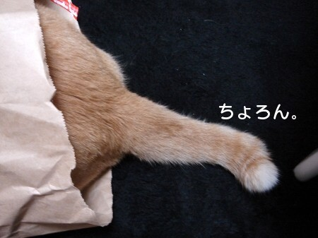 ジョイフルぽん田 (3)