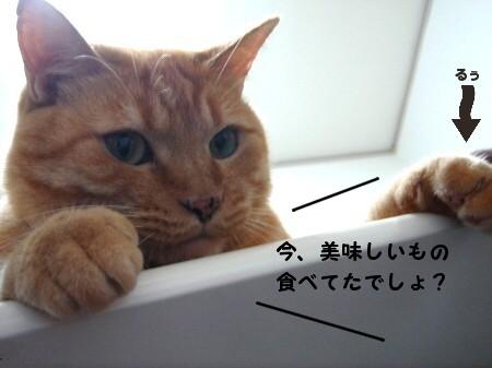 テ~ブルの上にのってはいけましぇん! (1)