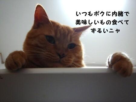 テ~ブルの上にのってはいけましぇん! (2)