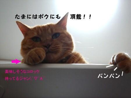 テ~ブルの上にのってはいけましぇん! (3)
