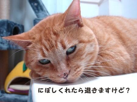 テ~ブルの上にのってはいけましぇん! (4)