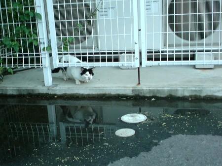 気にニャる猫たち (1)