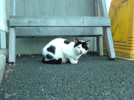 気にニャる猫たち (2)