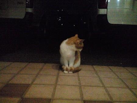 気にニャる猫たち (3)