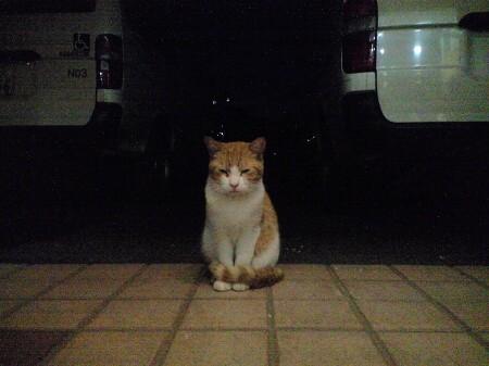 気にニャる猫たち (4)