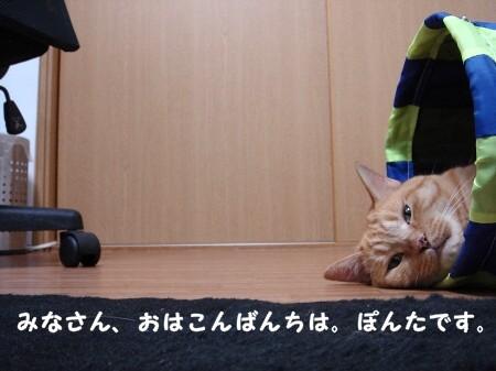 遊び疲れたらそのまま寝袋になります。 (1)