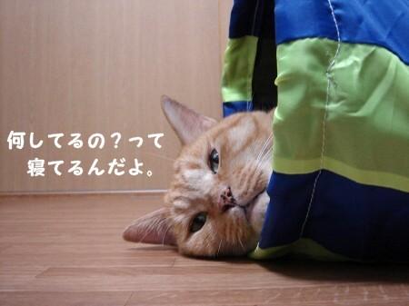 遊び疲れたらそのまま寝袋になります。 (2)