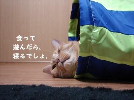 遊び疲れたらそのまま寝袋になります。 (3)