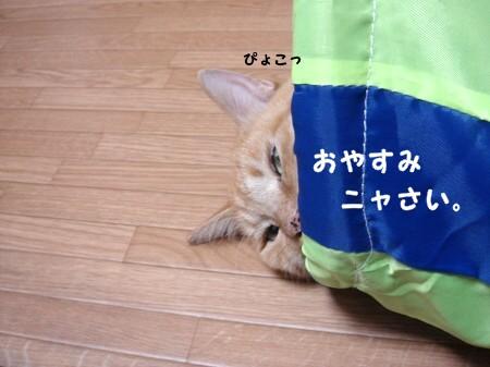 遊び疲れたらそのまま寝袋になります。