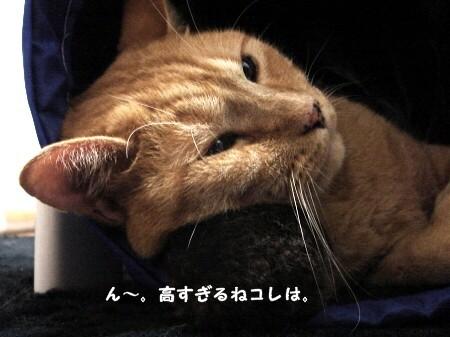 枕の高さは何センチ? (1)