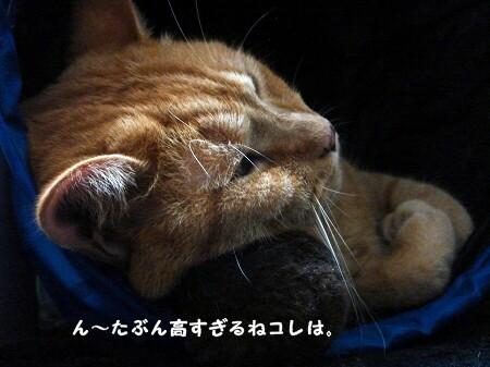 枕の高さは何センチ? (2)